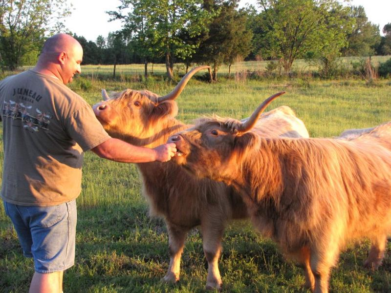 Scottish Highlands Cows for sale in S.E Oklahoma at Double C Exotics
